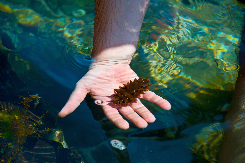 Морской женьшень (экстракт трепанга, 30 капсул)